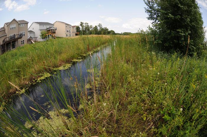 RCWD - Rare Plant Survey in Anoka County