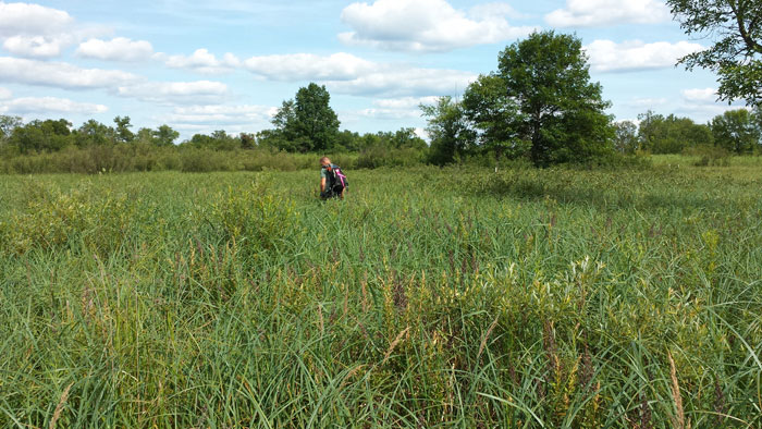 Blaine Wetland Sanctuary - Site 7
